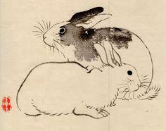 kyoto rabbits
