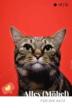 Bei der Einrichtung nur den eigenen Geschmack zu berücksichtigen, ist egoistisch. Die Mitbewohner*innen sollten fairerweise ein Wörtchen mitmiauen dürfen. Katzen ist das Optische wahrscheinlich eh egal. Sie wollen klettern und kratzen. Wir wollen ästhetisches Möbeldesign. Man trifft sich in der Mitte. Möbel die Katz und Katzenliebhaber erfreuen findet ihr hier. #katzenmöbel #katzen #haustiere #katzenmöbel #haustierbedarf #katzenhaltung #living #möbel Tier Fotos, Fur, Cats, Animals, Interior, Style, Pets, Pet Dogs, Roommates