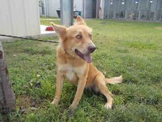 09/13/16-ROSENBERG, TX - Pets at Ft. Bend Animal Control 19 hrs ·  This…