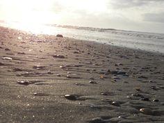 I love the way the seashells on the sand look like nailheads on fabric. Folly Beach, SC - taken by me, Laura Elaine Smith
