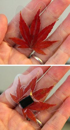 mommo design: 6 FALL LEAVES DIY PROJECTS Laminated leaf magnet