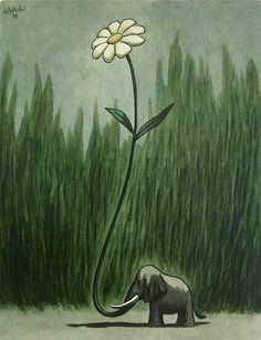 elephant-daisy