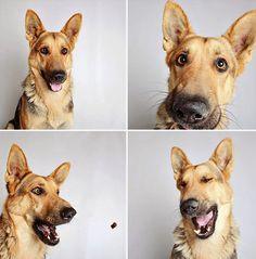 Conoce las fotografías adorables que una protectora de animales utiliza para conseguir adoptantes | Seamos Más Animales... Como Ellos