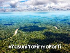 """Amazon Watch - Join the Call to Save Yasuní, the Last Wonder of the Amazon! 