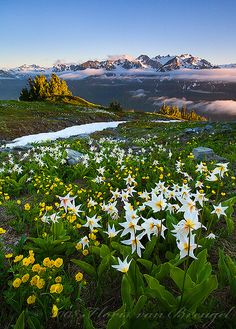 Mount Olympus and Flowers from the Bailey Range, Olympic National Park, Washington; photo by Floris van Breugel Parque Natural, Parc National, National Forest, All Nature, Washington State, Alaska, Beautiful Places, Beautiful Boys, Beautiful Pictures