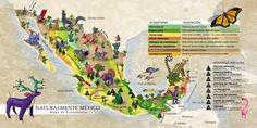 [mapa+ecosistema.jpg]