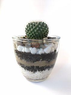 Tiramisu  Round glass live terrarium  Handmade in Melbourne