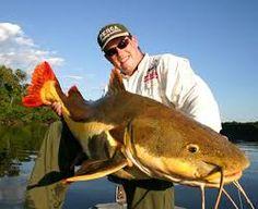 pescaria de peixe grande no pantanal