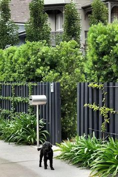 Garden Fencing Ideas (An Inspirational Guide to Build Garden Fence – Design Backyard Privacy, Backyard Fences, Garden Fencing, Front Yard Landscaping, Trellis Fence, Landscaping Ideas, Hedges Landscaping, Home Fencing, Dog Garden
