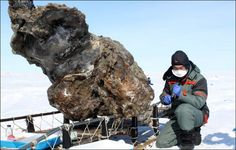 Stunning Mammoth Unearthed Tia Ghose, LiveScience Staff WriterDate: 31 May 2013 Mammoth unearthedCredit: Semyon Grigoriev | North-Eastern Federal University in YakutskIn May 2013, researchers Semyon Grigoriev and colleagues at North-Eastern Federal University in Yakutsk recently unearthed an astonishingly well-preserved mammoth carcass on an island off the coast of Siberia.