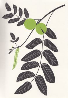 L'Herbier d'Emilie Vast, Arbres feuillus d'Europe, le Noyer