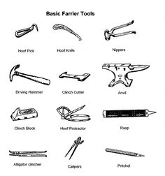 farrier's tools - The rest of this book can be found at; http://www.pinterest.com/HorseInterests/illustrations-handouts/