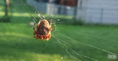 Not all spiders build webs and more cool things you should know about spiders   Iowa DNR.