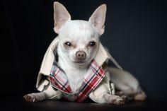 Les chiens sont à la pointe de la mode chez Oh! Pacha