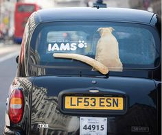 Clever Ad: Rear Windshield Wiper as Dog's Wagging Tail.I want this for my car!