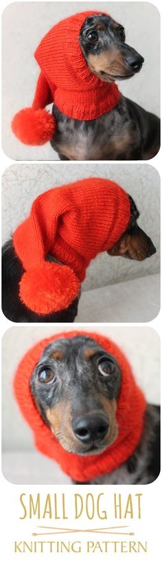 Cuteness overload--am I right? LOL!!! #doghat #dogclothing #sillyhat #pethat #dachshund