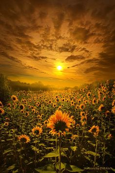 Sunset in Summer Field ~ Marvelous Nature