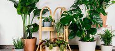 Shop Easy Indoor Plants - Bloomscape Buy Indoor Plants Online, Big Indoor Plants, Patio Plants, Fake Plants, Outdoor Plants, Hanging Plants, Indoor Garden, Outdoor Gardens, Monstera Deliciosa