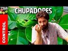 Como cuidar un limonero de las 4 estaciones - Cosas del Jardin Plant Leaves, Youtube, Videos, Instagram, Eco Friendly, Gardening, Tips, Crafts, Gardens