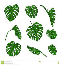 Illustration of A set of Botanical tropical fern leaves to create bushes and trees in computer graphics. The elements of the game. Vector illustration vector art, clipart and stock vectors. Vector Design, Vector Art, Botanical Illustration, Ferns, Stickers, Design Elements, Plant Leaves, Tropical, Create