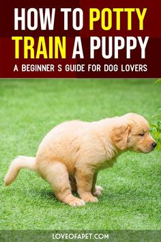 Military Dog Training How To Potty Train A Puppy A Beginners Guide For Dog Lovers. Dog Training How To Potty Train A Puppy A Beginners Guide For Dog Lovers. Dog Training Treats, Puppy Training Tips, Training Your Puppy, Dog Treats, Potty Training Puppies, Training Quotes, Background Grey, Dog Training Courses, Training Classes