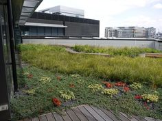 Billedresultat for green space with their vegetation and plantings
