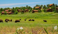 Zion Mountain Ranch | Cabins, Cabin Suites, and Lodges