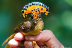 Real Scientists Yasha On Twitter Pet Birds Amazon Animals Pretty Birds
