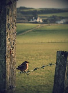 Morning-time in Ireland. Gorgeous countryside with a little bird greeting the sun.