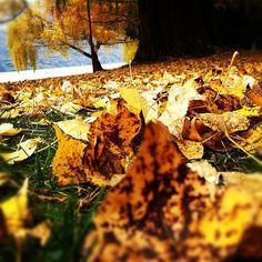 Autumn colours. :D <3
