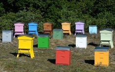 Peindre ses ruches : la peinture écologique, idéale pour les ... Save The Bees, Bee Happy, Bees Knees, Bee Keeping, Beehive, Homesteads, Honey Bees, Coworking Space, Pain