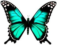 Gallery - Recent updates Butterfly Clip Art, Butterfly Drawing, Butterfly Pictures, Butterfly Template, Butterfly Painting, Butterfly Wallpaper, Butterfly Kisses, Butterfly Design, Blue Butterfly