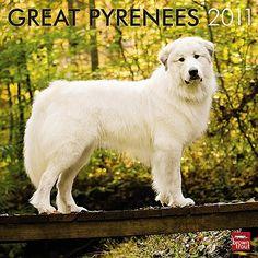 Royal dog of France