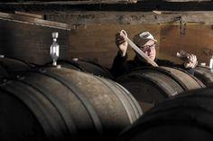 Hudson-Chatham Winery Bet on an Oddball Grape — and Won