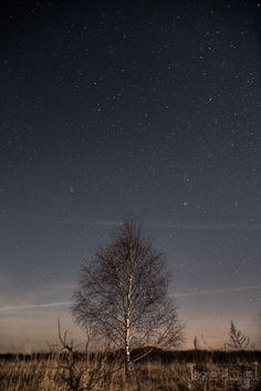 Drzewo i gwiazdy