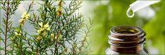 lifeme: TEA TREE OIL OLIO ESENZIALE PROPRIETA'