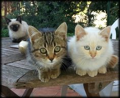 How cute is this little trio of feral kittens  ......