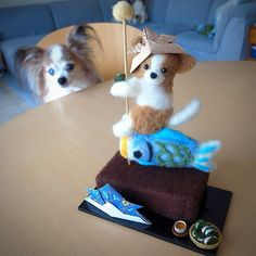 .@momos_gallery | Needle Felting Papillon on Childrens Day in Japan | Webstagram - the best Instagram viewer