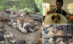Exclusive from the frontline of war against Thailand dog meat trade