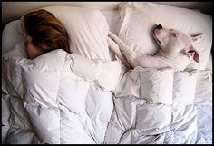 doggies need pillows too.