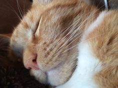Snoring Kitten Will Bring a Smile to Your Face   Rumble - Yahoo Screen-Clarence the Kitten,I had one too,same,lol