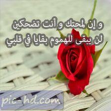 حالات واتس اب حب صور حب حالات واتساب Floral Rose Floral Rings