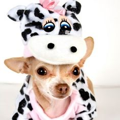5 Adorable Halloween Costumes for Pets #halloween #pets