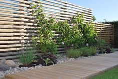 Climbing rose on the wooden fence When historical within thought, the pergola may be encountering Outdoor Projects, Garden Projects, Back Gardens, Outdoor Gardens, Landscape Design, Garden Design, Scandinavian Garden, Garden Styles, Dream Garden