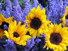 Organic lavender - from Malibu, Calif., and organic sunflowers from Ventura, Calif. They sure play well together in a vase!