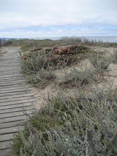 beach boardwalk at moss landing #bryllupsfeber  http://www.bryllupsfeber.dk/billig-bryllupsrejse/billig-bryllupsrejse-til-usa/