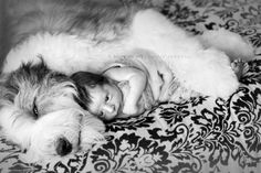 dog and baby love
