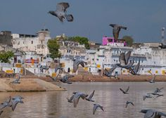 Book Ajmer Pushkar Day Tour from Bhati Tours to explore major  tourist attractions in this city.  The Pushkar Fair (Pushkar Camel Fair) or locally Pushkar ka Mela is an annual five-day camel and livestock fair held in the town of Pushkar in the state of Rajasthan, India. It is one of the world's largest camel fairs. Apart from the buying and selling of livestock, it has become an important tourist attraction. Book Tours from Jaipur Now…  Price starts from @ 2800 More…