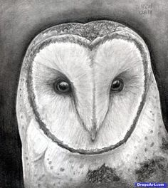How to Draw an Owl Head, Masked Owl