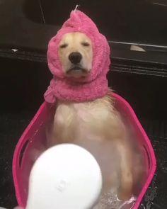 Dog memes funny, funny animal memes, funny memes, funny dog pictures, dog m Cute Funny Animals, Cute Baby Animals, Funny Dogs, Animals Dog, Funny Dog Memes, Wild Animals, Funny Cute, Cute Puppies, Cute Dogs